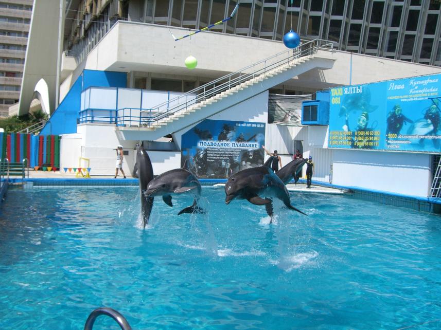 Дельфинарий ялта фото